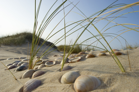 Picture no: 10153854 neulich am Strand Created by: danielschoenen