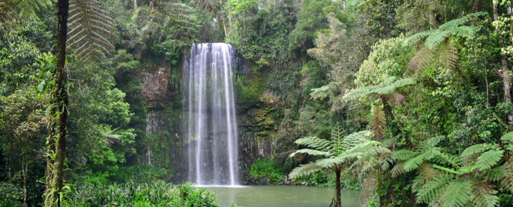 Picture no: 10175197 Millaa Millaa Waterfall Created by: MSPictures