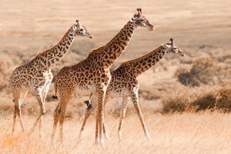 Picture no: 10192530 Out of Africa Created by: Safarifotografie