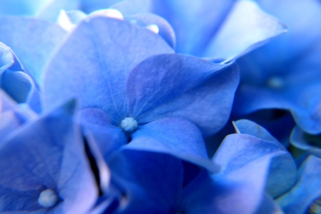 Picture no: 10195743 Blue Created by: youhaveadream