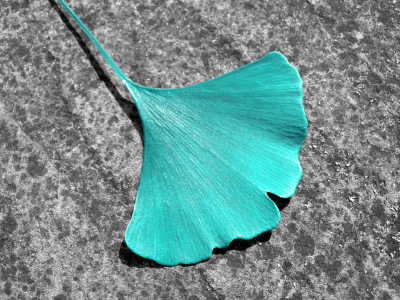 Picture no: 10203027 GINKGO - BLATT Created by: blackpool