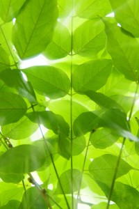Picture no: 10217519 Green Leaves Created by: Steffen Gierok