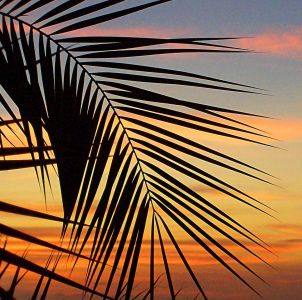 Picture no: 10232675 Palmtree-Sunset Created by: Marion227