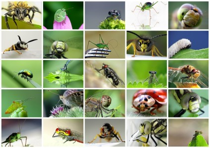 Picture no: 10266557 posing insects Created by: Birgit Presser