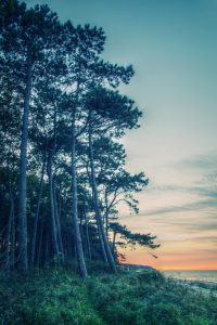 Picture no: 10267923 Trees on the Beach Created by: FotoDeHRO