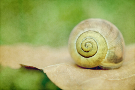 Picture no: 10287315 Schnecke Created by: mexi-photos