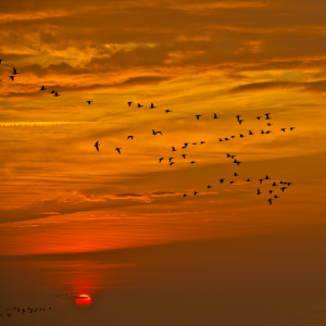 Picture no: 10287617 Sonnenaufgang Created by: Hakrida