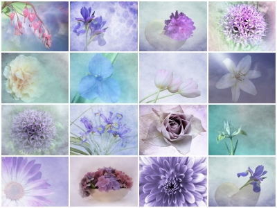 Picture no: 10288585 pastel flower collection Created by: Anja Otto