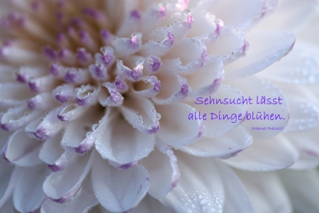 Picture no: 10289161 Sehnsucht Created by: youhaveadream
