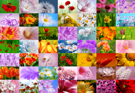 Picture no: 10341405 Blumen Collage Created by: Atteloi