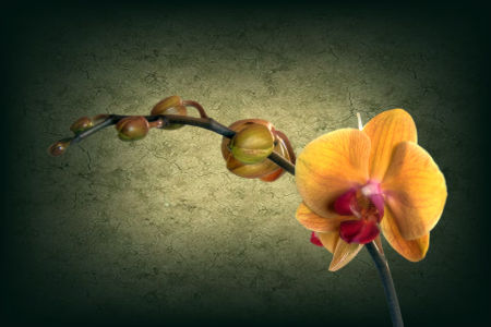 Picture no: 10357637 Orchidee Created by: Gerhard Albicker