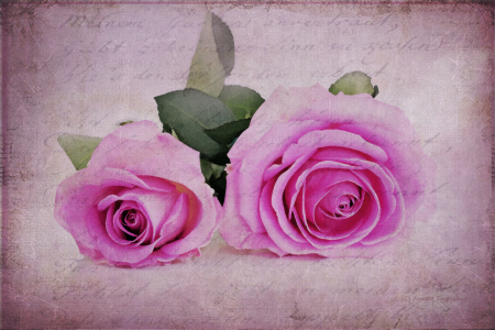 Picture no: 10372633 ODE AN DIE ROSE Created by: Annett Tropschug