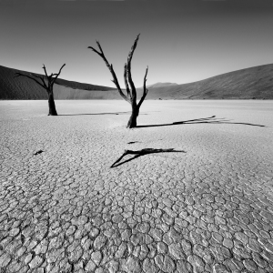 Picture no: 10376349 Dead Vlei Created by: sensorfleck