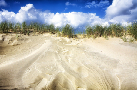 Picture no: 10376537 seagull on a dune Created by: Timo Geble