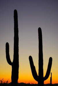 Picture no: 10383737 Saguaro National Park Created by: UCH