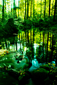 Picture no: 10390099 Herbstwald 3 Created by: oliver steiner