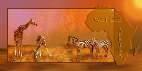 Picture no: 10400449 Wildlife Afrika Collage Created by: Mausopardia