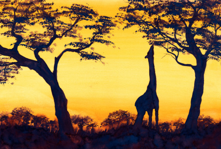 Picture no: 10404979 Giraffe im Sonnenuntergang Created by: JitkaKrause