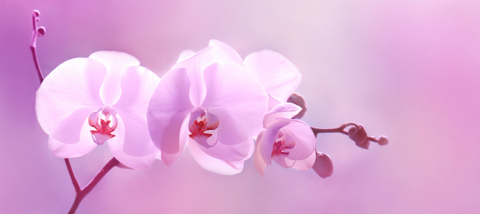 Picture no: 10419265 Orchidee Created by: Atteloi