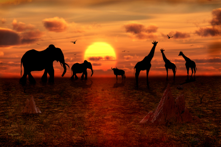 Picture no: 10463336 In Afrika geht die Sonne unter  Created by: teddynash