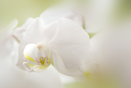 Picture no: 10471792 Orchidee Created by: OmSchi
