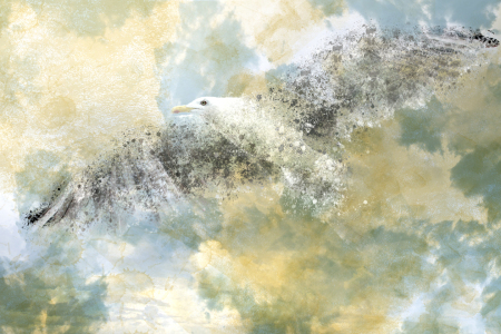 Picture no: 10476002 Digital Art Seagull Created by: Melanie Viola