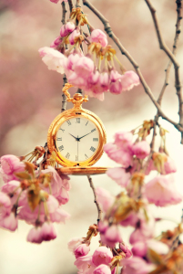 Picture no: 10476608 Time to Spring Created by: Steffen Gierok