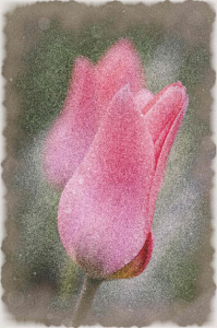 Picture no: 10494869 Tulpen malerisch Created by: herbi79