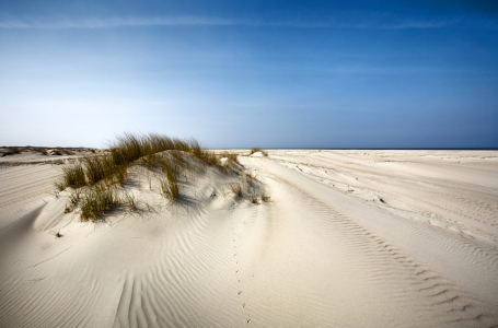 Picture no: 10514051 Spuren im Sand Created by: Timo Geble
