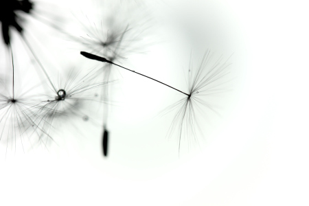 Picture no: 10523675 Pusteblume Created by: Jana Behr