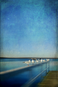 Picture no: 10525637 Nine seagulls Created by: yammay