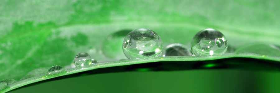 Picture no: 10542447 Drops Created by: Gerhard Albicker