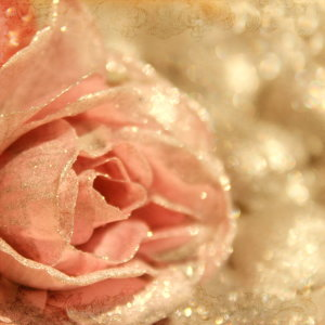 Picture no: 10552269 Rose Created by: Heike Hultsch