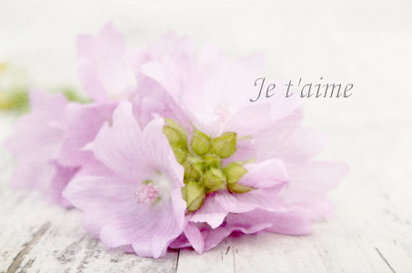 Picture no: 10564990 Je t aime Created by: Heike Hultsch