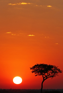 Picture no: 10566134 African Sunset Created by: Manuel Schulz