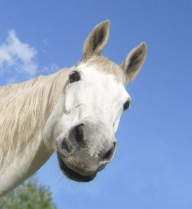 Picture no: 10570723 Was guckst du? Created by: Eva-Maria Oeser