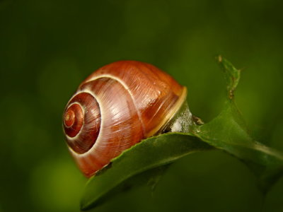 Picture no: 10596581 Schnecke Created by: Heike Hultsch