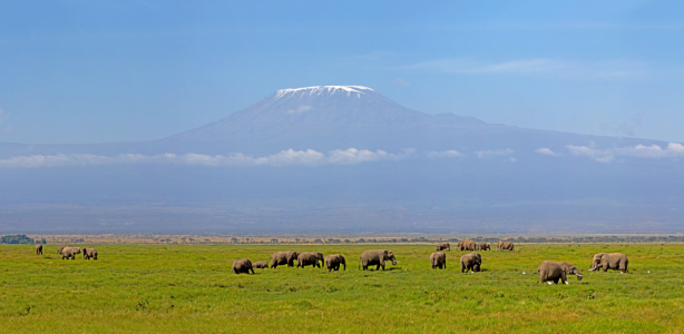 Picture no: 10599068 Kilimanjaro Panorama Created by: Safarifotografie