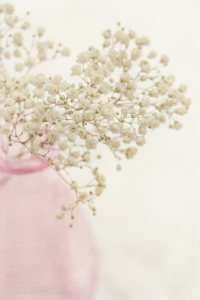 Picture no: 10599718 baby breath Created by: mexi-photos
