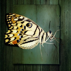 Picture no: 10620482 Schmetterling Created by: Heike Hultsch