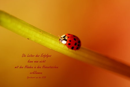 Picture no: 10636366 Die Leiter des Erfolges Created by: Heike Hultsch