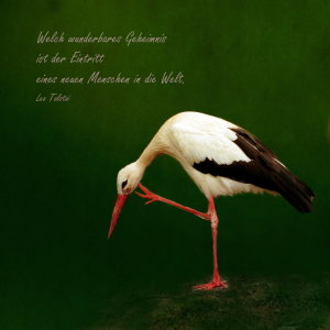 Picture no: 10648872 Das Geheimnis Created by: Heike Hultsch
