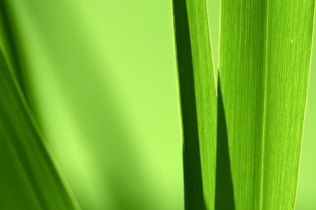 Picture no: 10655784 Farbe der Natur Created by: Gerhard Fechtig