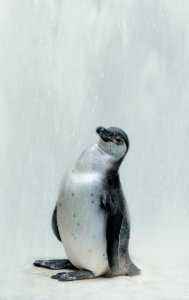 Picture no: 10669746 Pinguin - Vogelpark Marlow -  Created by: Heike Hultsch