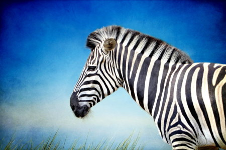 Picture no: 10671918 Zebra Created by: Heike Hultsch