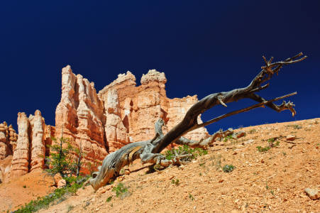 Picture no: 10673426 Inside Bryce Canyon Created by: DenisFeiner