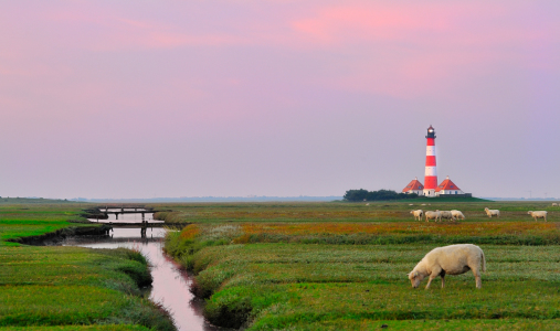 Picture no: 10683844 Westerhever Created by: FineArtImages