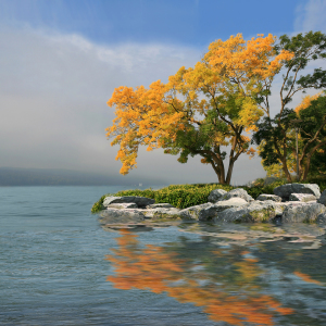 Picture no: 10692151 Herbst am Bodensee Created by: Mausopardia