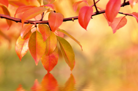 Picture no: 10695137 Herbstblätter Created by: Atteloi