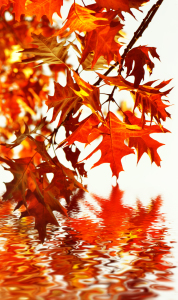 Picture no: 10700043 Herbst Created by: Atteloi